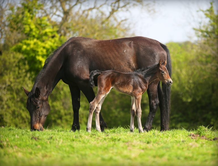 Mare And Foal Image